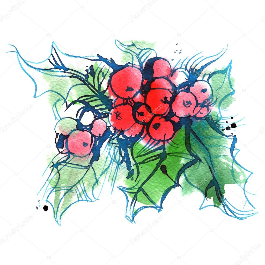 Ilex, green sprig of holly with red berries on a white