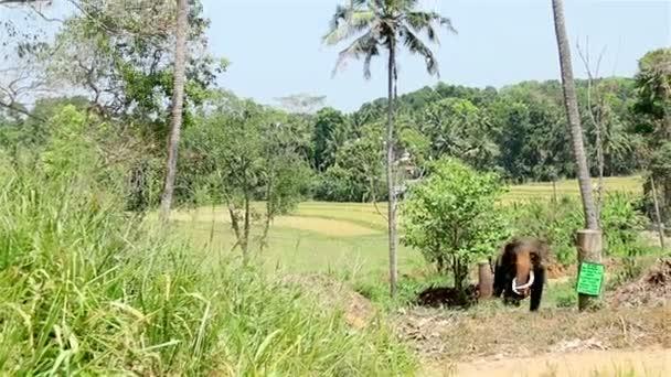divoký slon v džungli