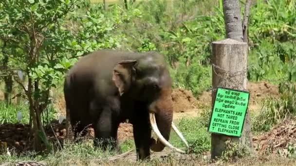 vadon élő elefánt a dzsungelben