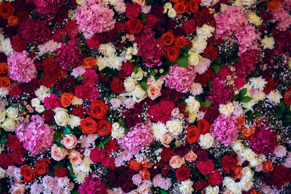 Fondos De Pantalla Flores Rosadas Crisantemo Fondo: Pared Con Variedad De Flores, Rosas, Claveles, Hortensias