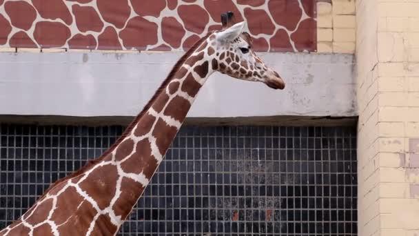 žirafy v zoo je v létě teplé počasí