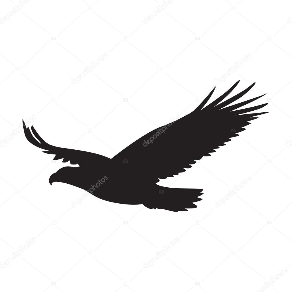 Силуэты хищных птиц в полете | Силуэты хищных птиц ...