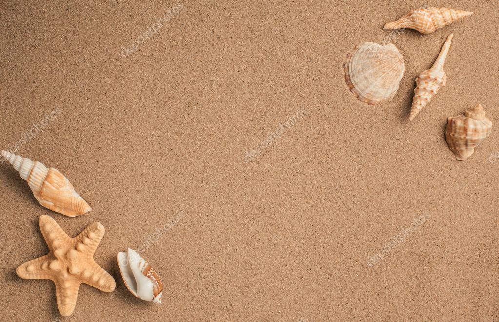 5291e8929d3e Étoile de mer et coquillages avec du sable comme fond. Texture sable — Photo