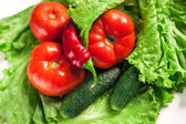Čerstvá bio zelenina. Podzimní zelenina. Sklizeň. Ingredience na salát. Hlávkový salát, rajčata, okurky, cuketa, lilek, papriky, chilli papričky.