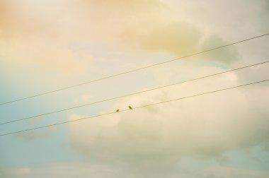 One bird on power line
