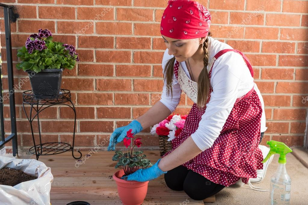 Girl with flowerpot replant flower of cyclamen