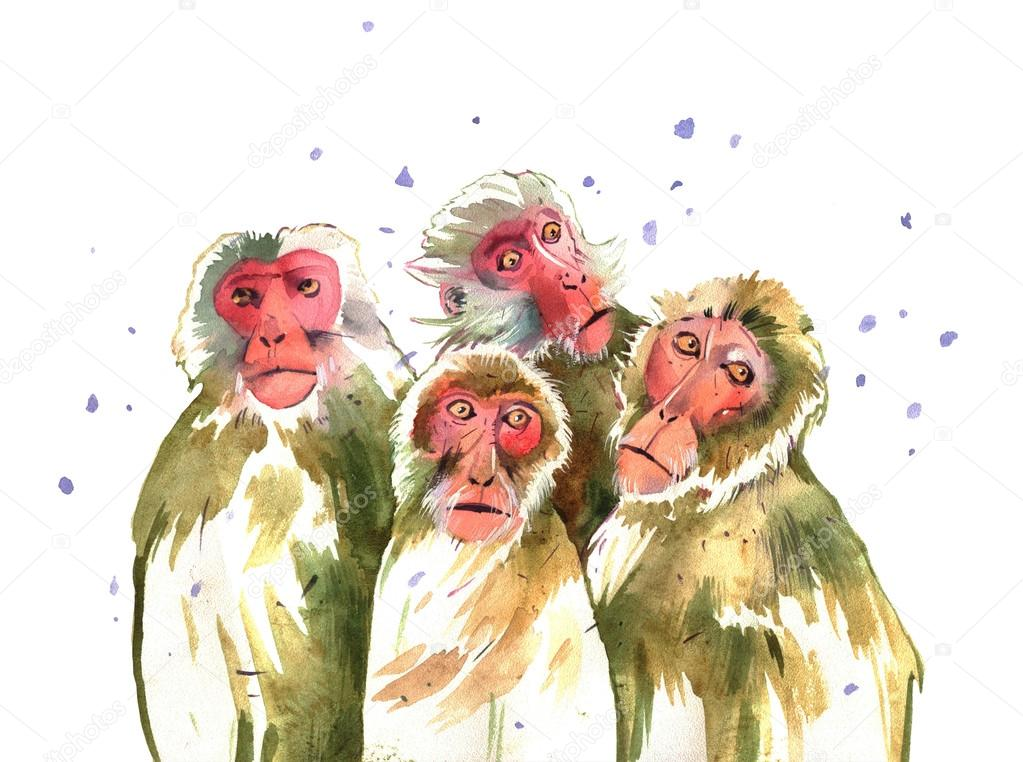 watercolor monkey, Japan