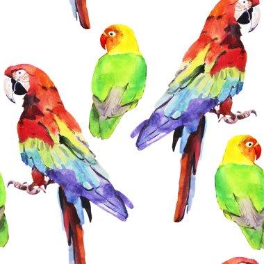 watercolor parrot lovebird