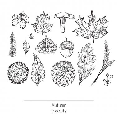 Hand drawn autumn beautiful set of leaves, flowers, branches, mushroom and berries, isolated on white background. Black and white illustration showing autumn beauty of nature with decorated objects. clip art vector