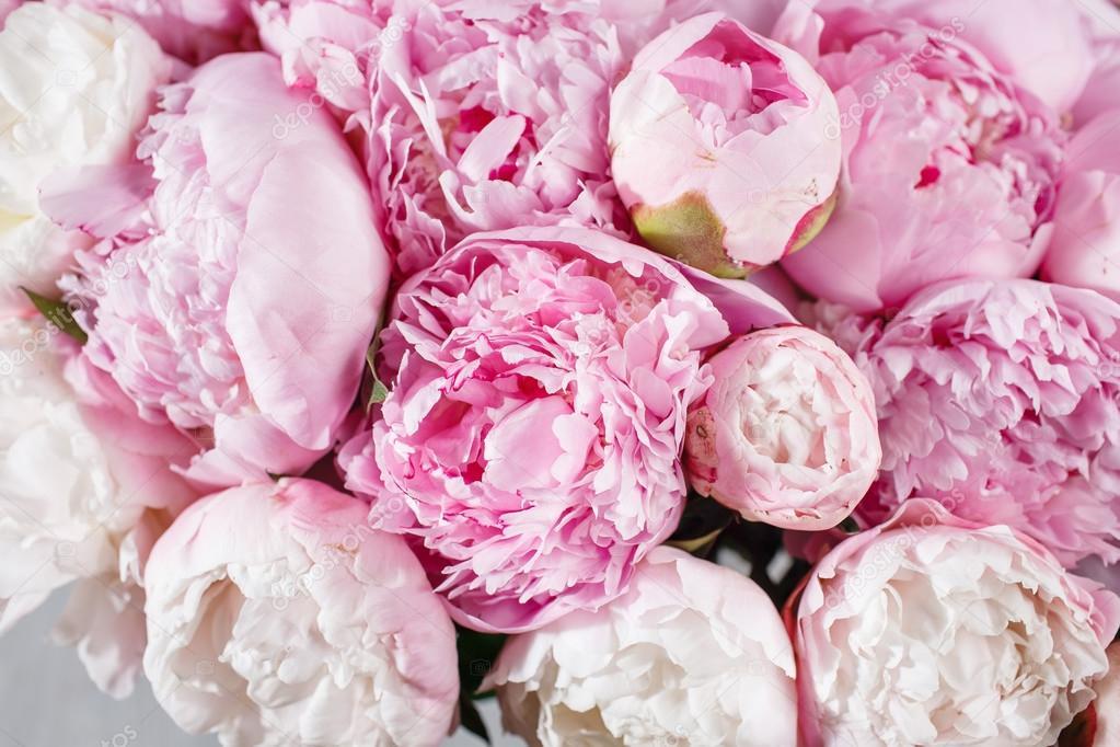 frische helle blühende Pfingstrosen Blumen mit Tautropfen auf ...