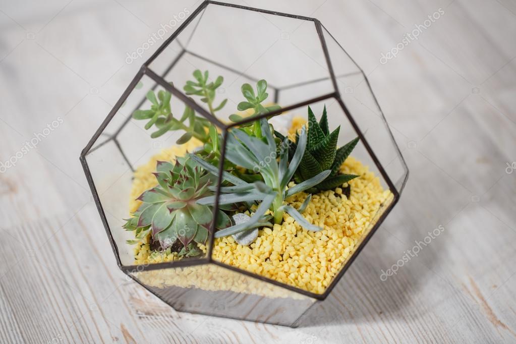 Florarium Glass vase with succulent plant. Miniature cactus   in a