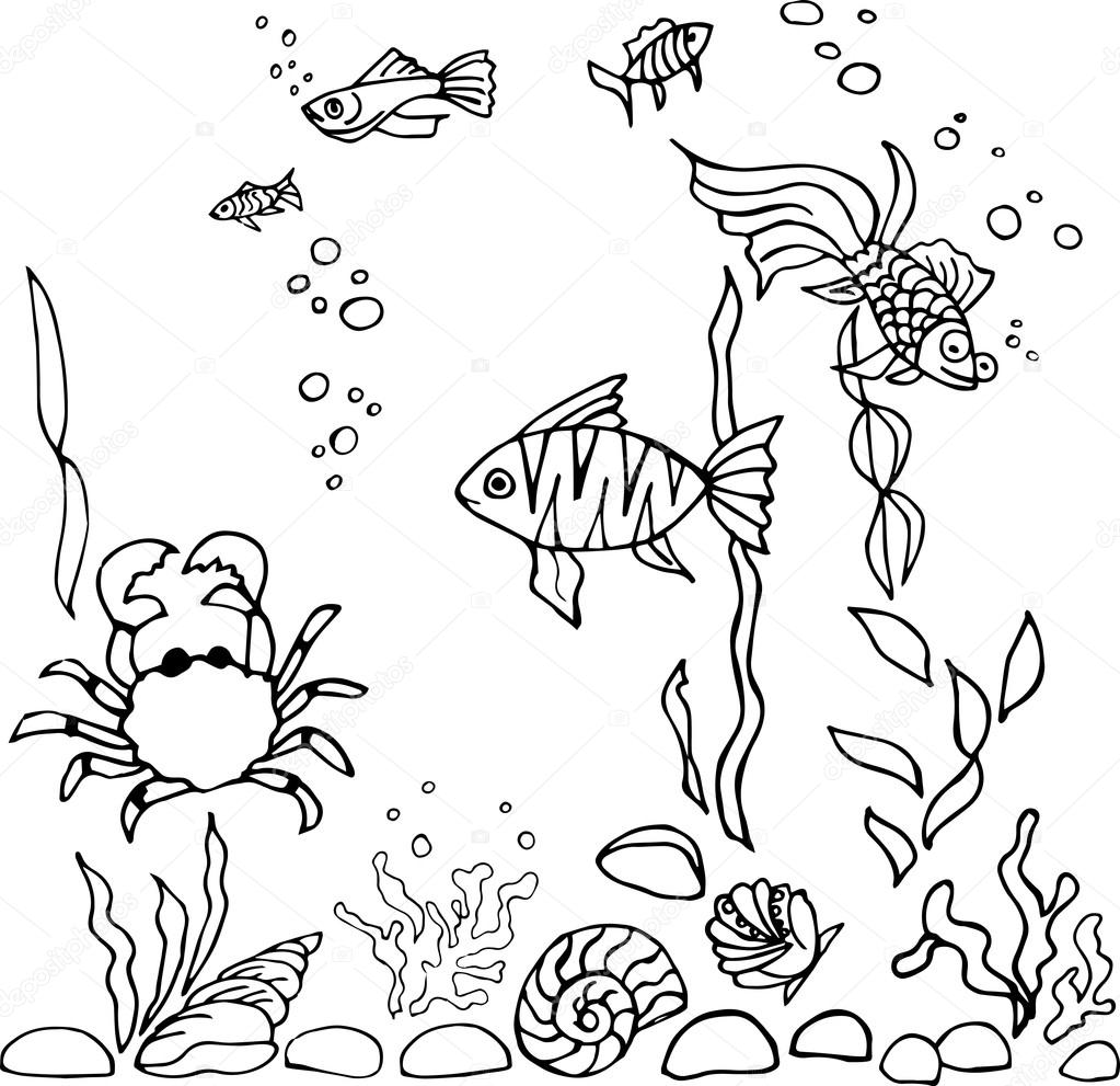 Aquarium Fish Sketch Stock Vector C Nataliavarlamova 111528336