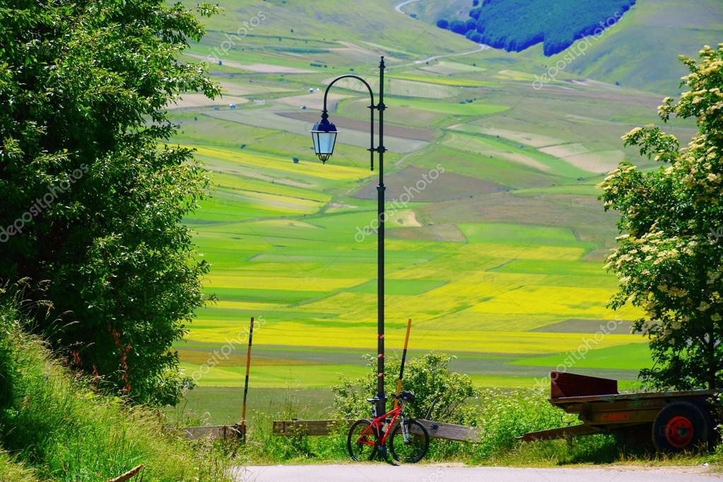 Bicycle leaning against a lamppost and a flowery field in the background in Italy
