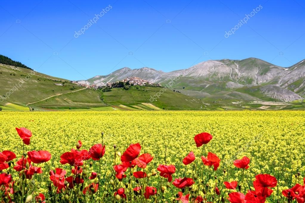 A flowery field with an italian village in the background