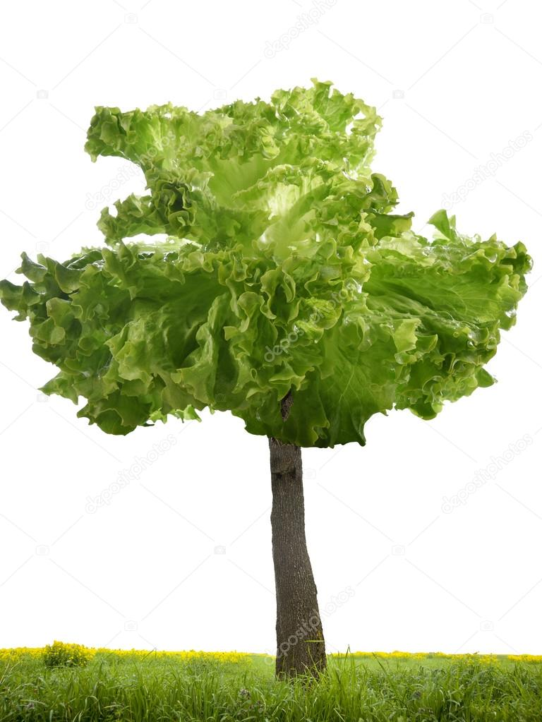 Albero con insalata