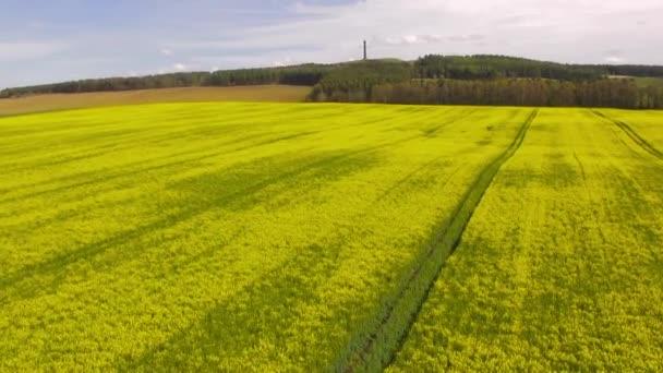 Aerial flight forward over an Oil Seed rape field, Scottish Borders