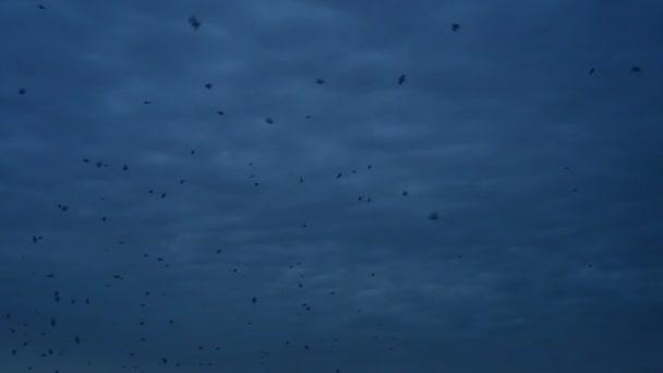 Crows Fly Black Sky