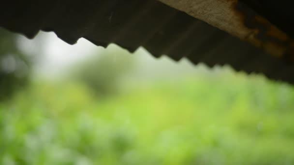 Prší ze střechy na farmě se zeleným pozadím