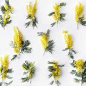 Fotografie Overhead view of bouquet of yellow mimosa pattern isolated on white background