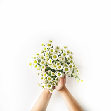 Chamomile bouquet in girl's hands