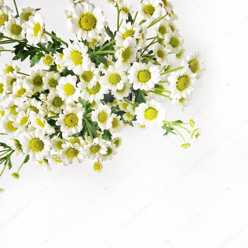 Chamomile bouquet on white background.