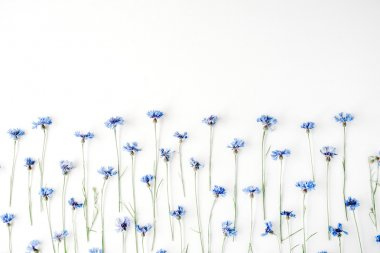 cornflowers on white background.