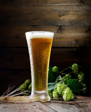 Beer in glass and hops