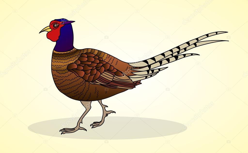 Pheasant. Poultry. Aviculture.