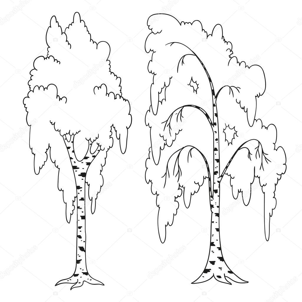 Libro para colorear de árboles. Esquema del vector de abedul ...