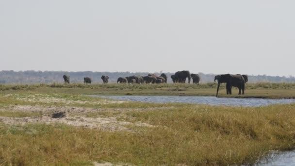 slon v národním parku chobe