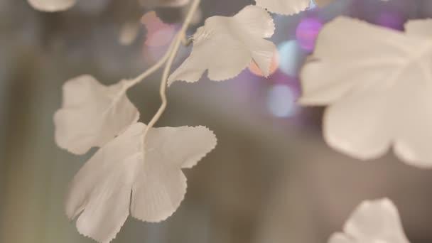 Bílé květy pozadí 1