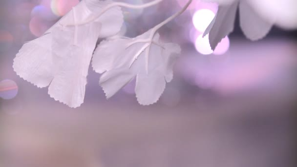 Pozadí bílé květy 3