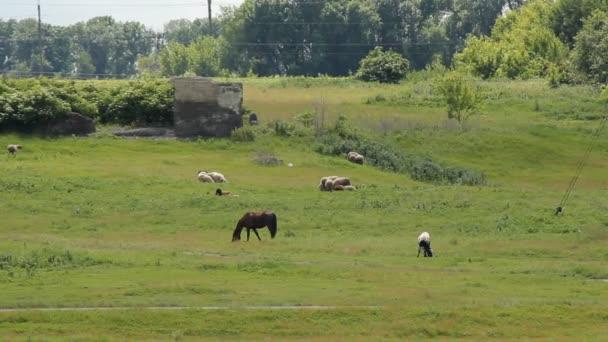 Summer Horse Grazing