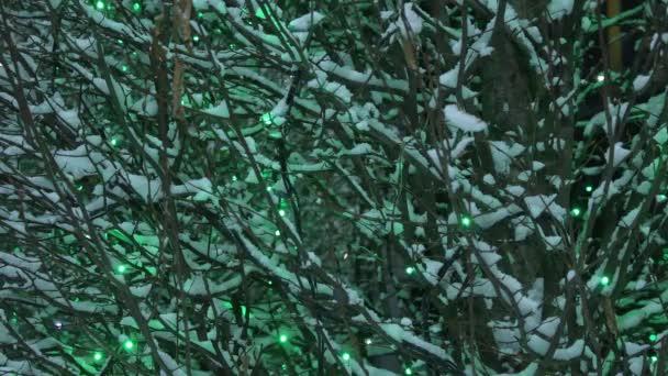 Schneebedeckte Bäume in der Nacht. Bäume, die nachts mit Schnee bedeckt sind, und elektrische Lampen, die eine festliche Neujahrsstimmung auf den Straßen der Stadt erzeugen