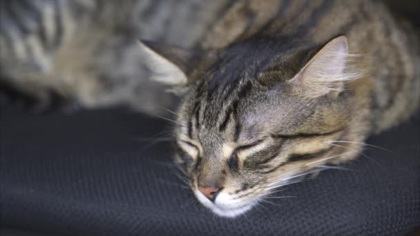 schöne gestromte Katze schläft auf dem Stuhl