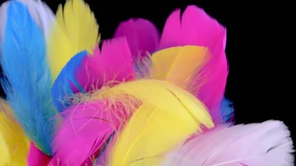 barevné pozadí s různobarevné peří na černém pozadí