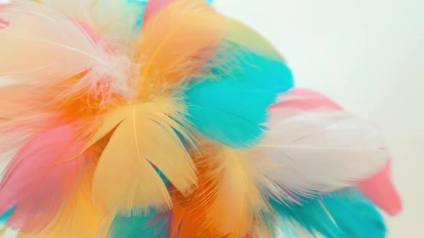 barevné pozadí videa s různobarevné peří na bílém