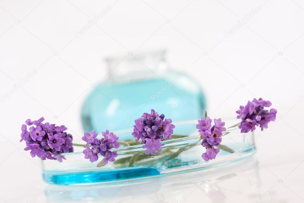 essential lavender oil,