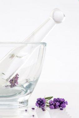 lavender flowers in glass mortar