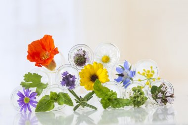 Flowers in test-tubes isolated on white