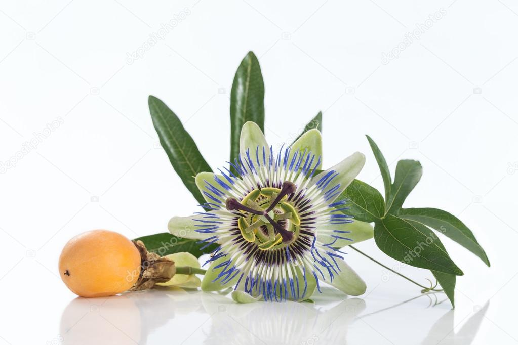 Passion fruit flower with ripe   isolated on white background