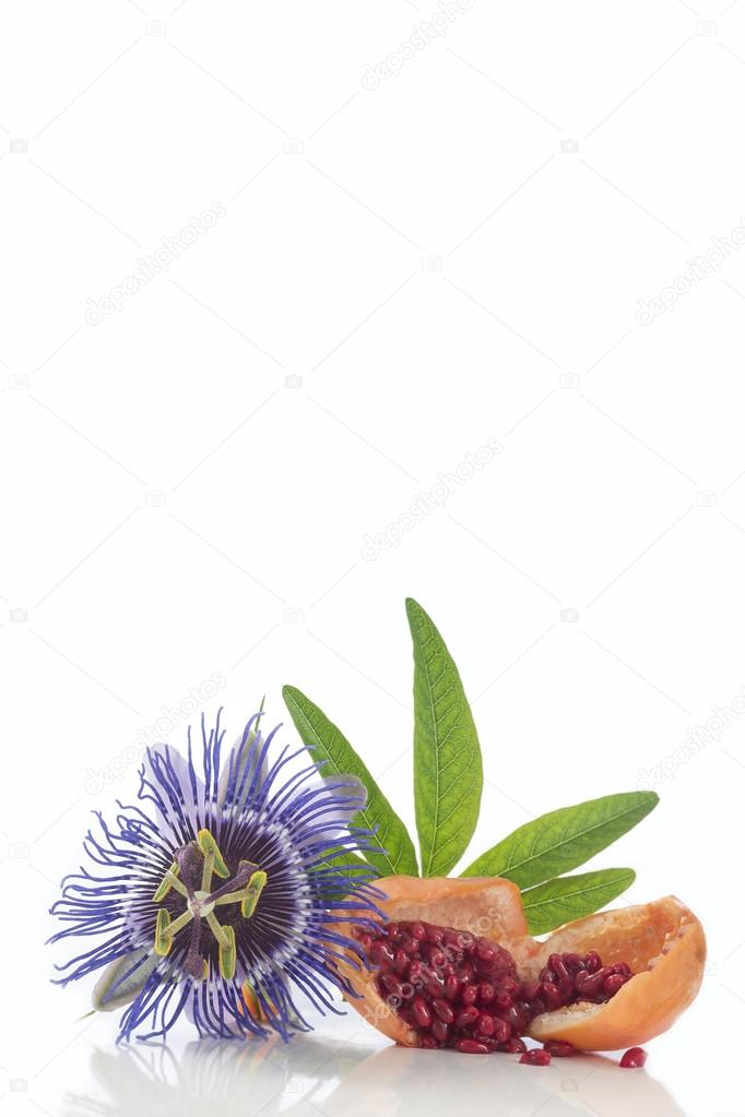 Flower and fruit Passionflower cut Herba Passiflora