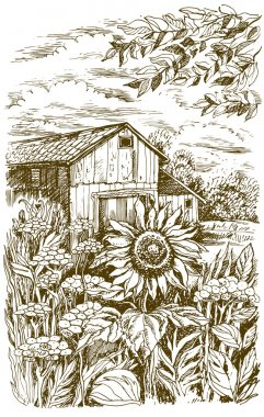 Landscape with sunflower. Vector hand drawn illustration. stock vector