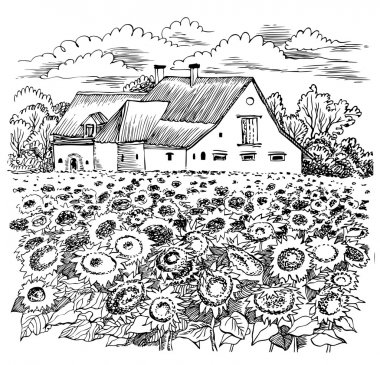 Landscape with sunflower. Vector graphic hand drawn illustration.