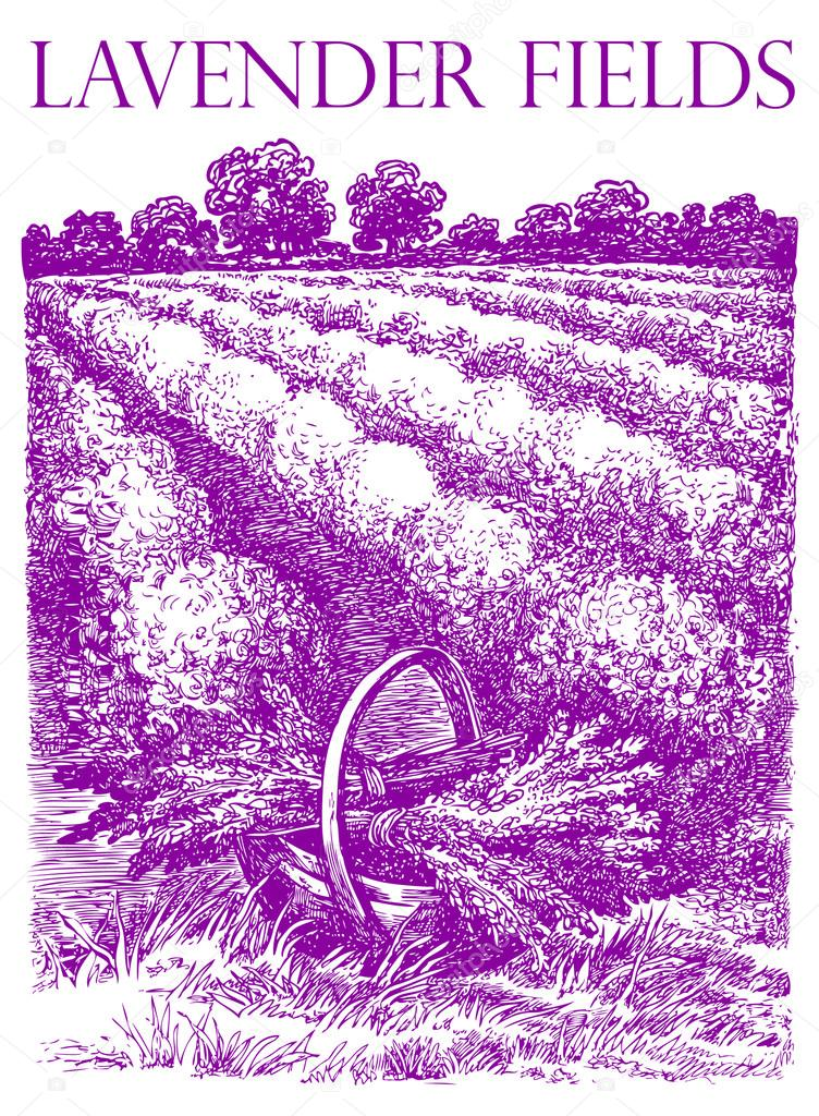 Provence landscape. Basket with  lavender bouquets. Vector hand drawn graphic illustration. Sketchy style.