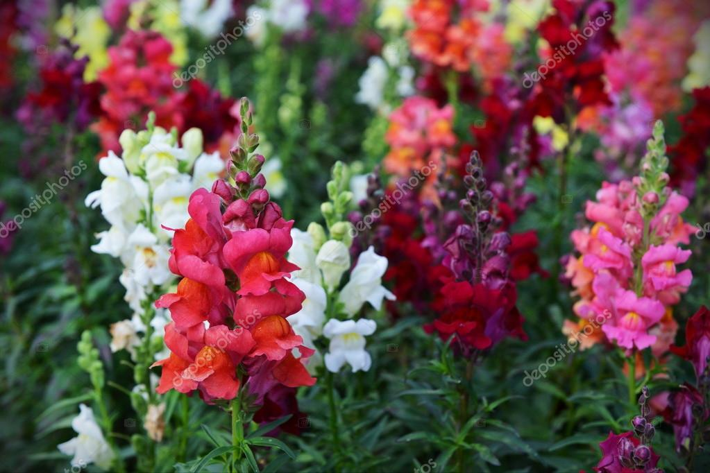 Colourful Flowerbed Background