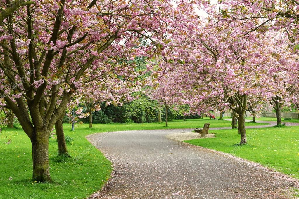 Springtime View of a Winding Garden Path