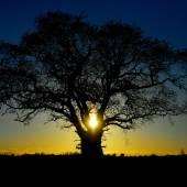 Fotografie  Oak Tree against a Beautiful Sunrise