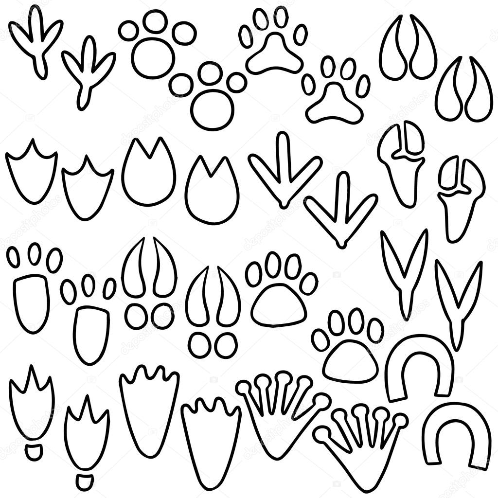 Vector Set Of Animal Footprints Stock Vector