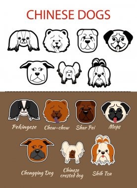 Chinese breed of dogs